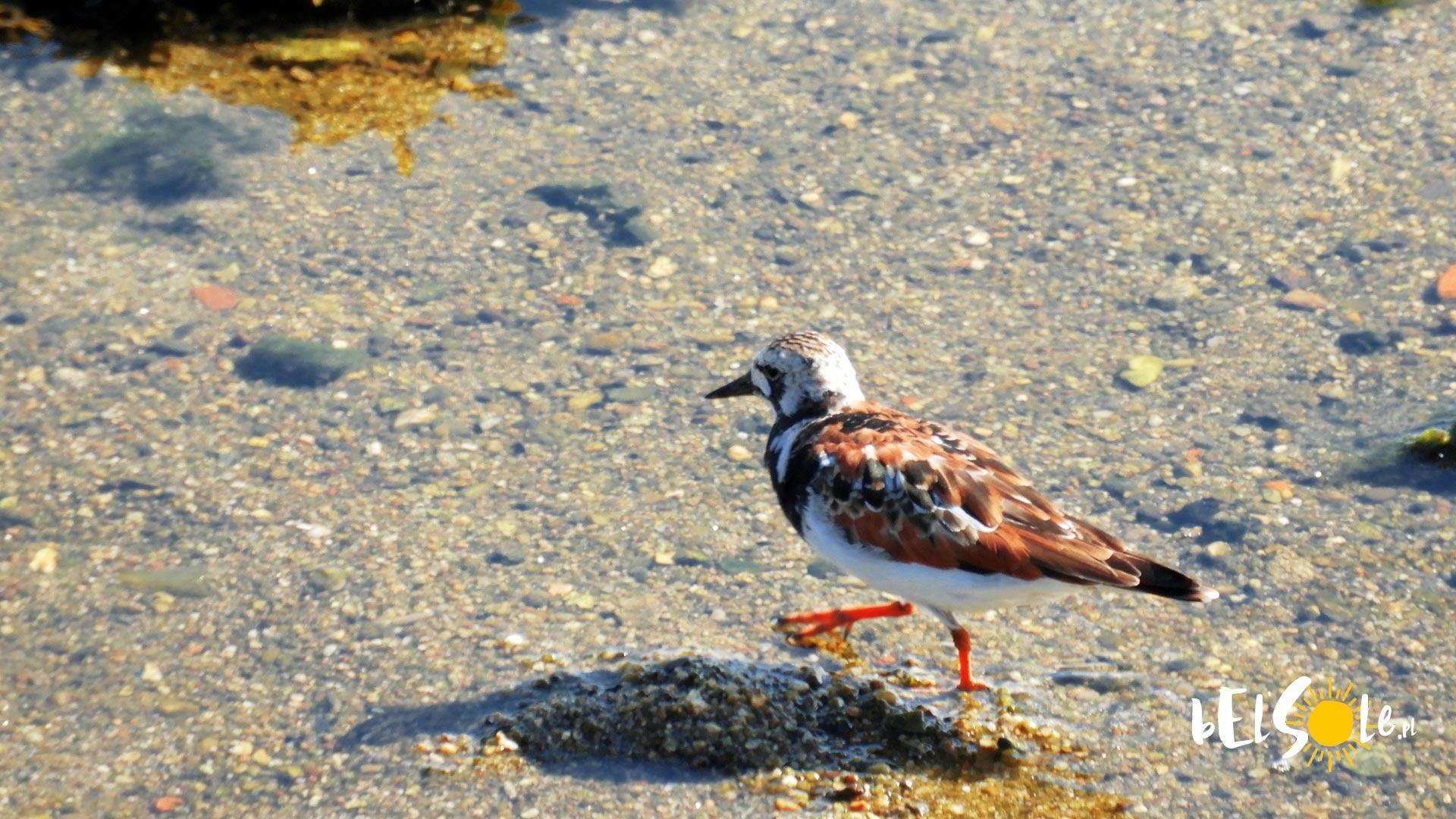 Ptaki Porto
