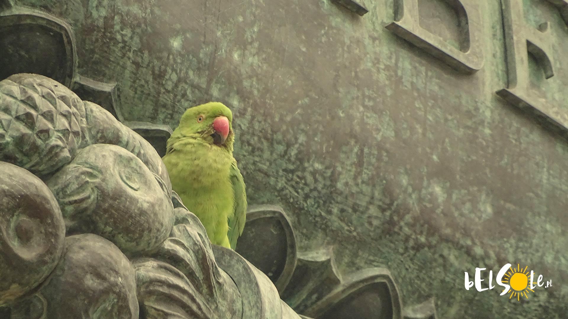 Papuga w Sewilli