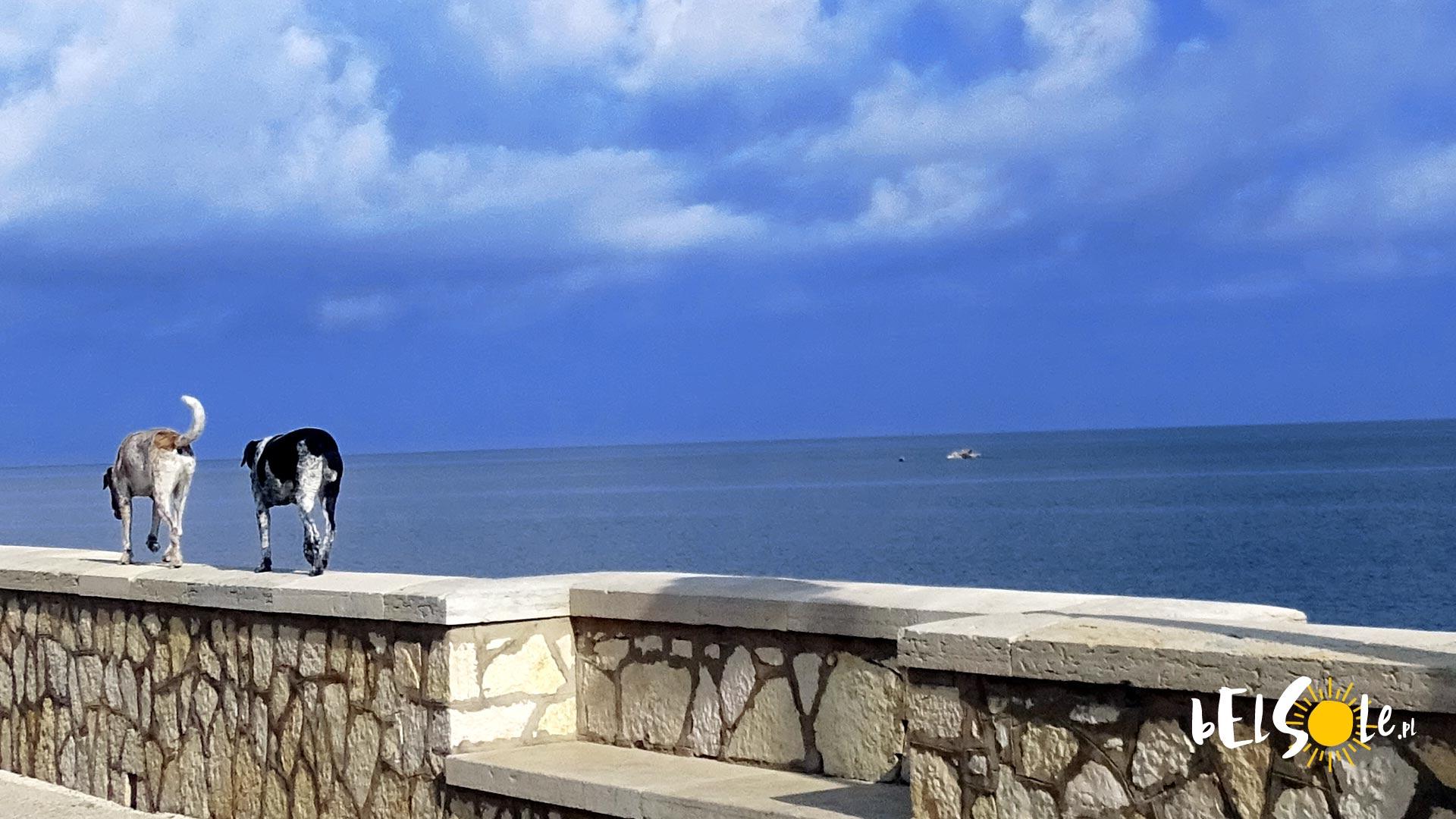 Psy na Sycylii