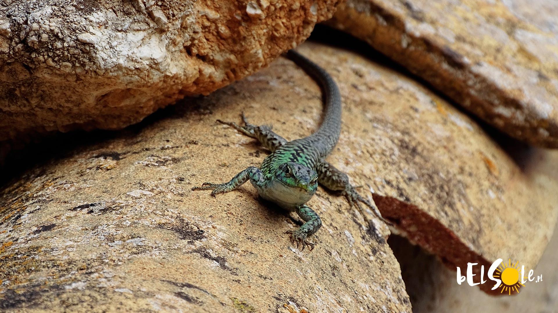 Węże, jaszczurki i skorpiony na Sycylii