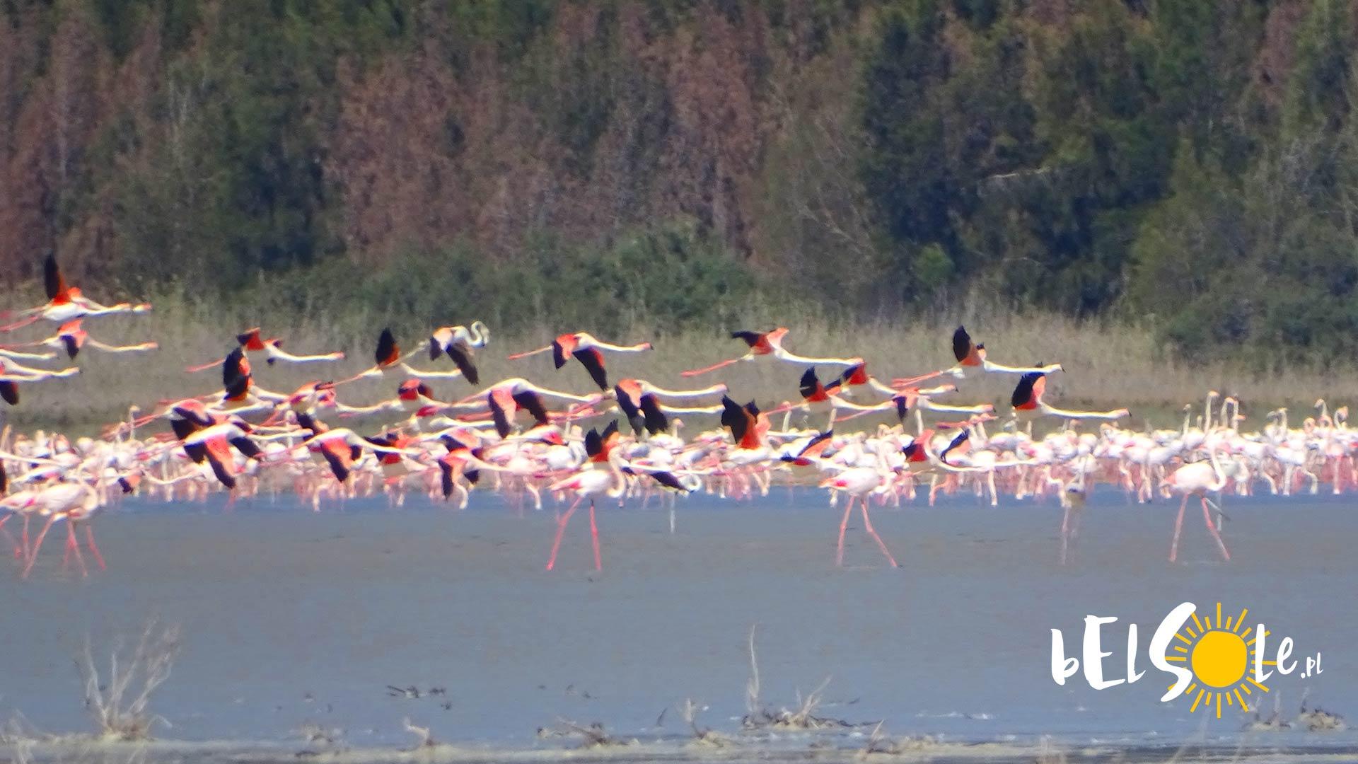 Flamingi Limassol