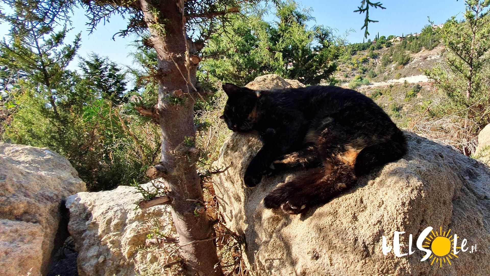 catpark cypr