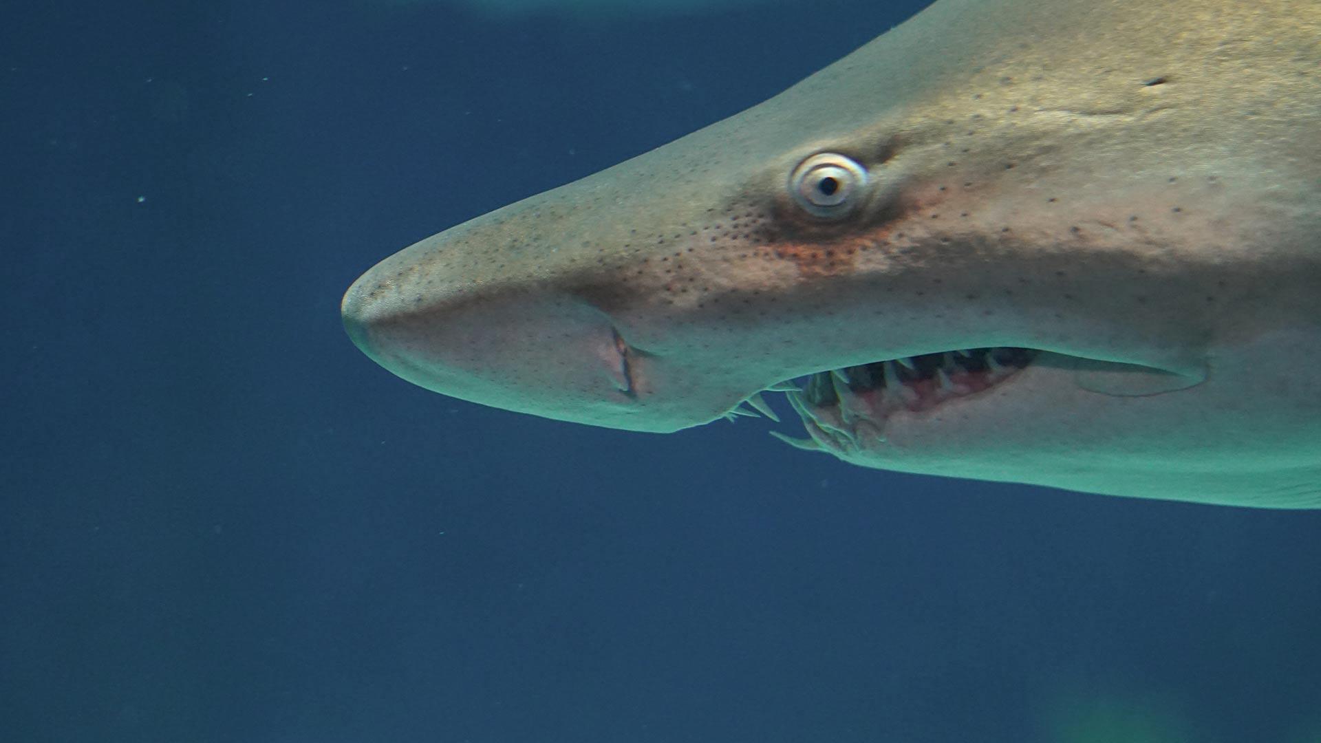 Czy na Rodos sa rekiny
